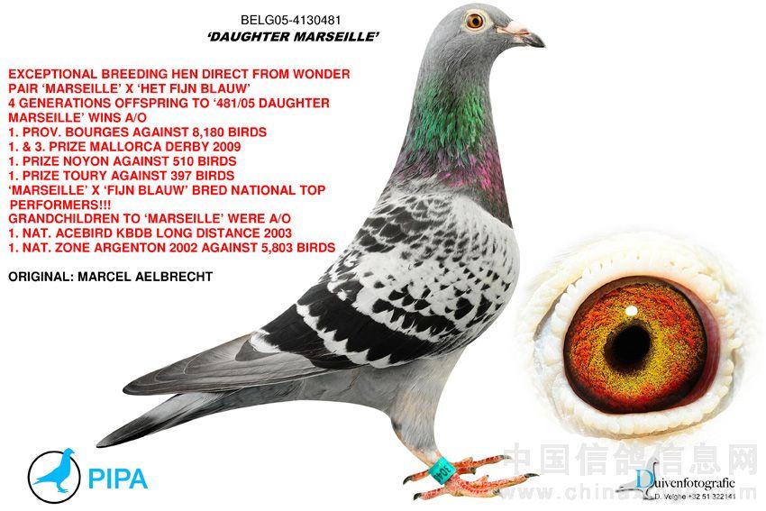 """...飞飞\""""直女 雌(♀) 特别呈献 收藏品!鸽界神话马歇尔. 阿布瑞契..."""