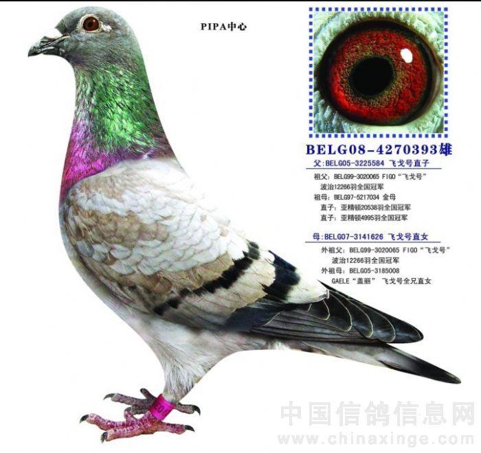 黄鹤鸟成鸟图片