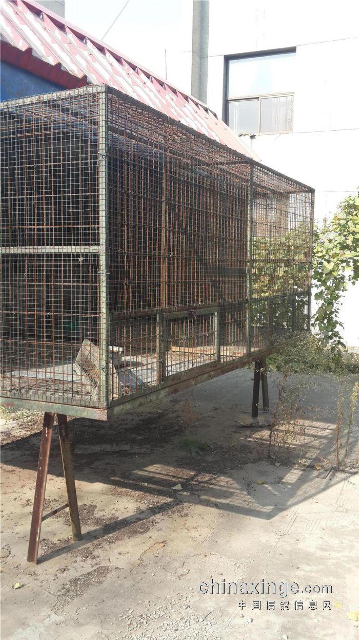 2016 最新鸽棚设计图 鸽笼 鸽笼展示