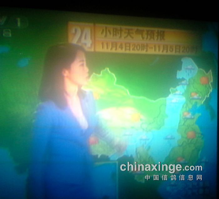 11月4号晚中央1台天气预报-中国信鸽信息网 w