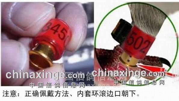 http://jlb.chinaxinge.com/pic3/201712/20171227175657651001.jpg