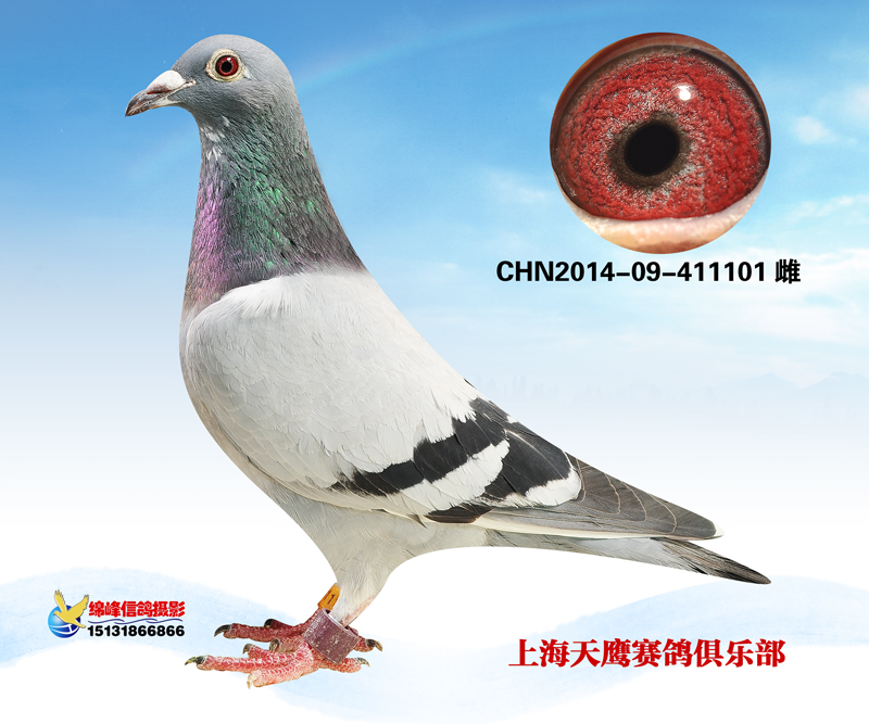 上海天鹰赛鸽俱乐部